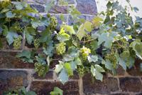 Deutsch Wine
